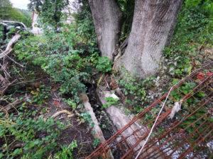 czy konieczne jest wycięcie drzewa?