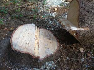wycinka drzew gdańsk