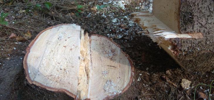 Wycinka drzewa, czy zawsze konieczna?